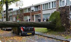Wat te doen als er een boom op je huis valt? En andere stormschade