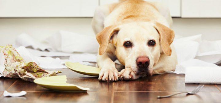 Schade door huisdieren, wordt die vergoed?