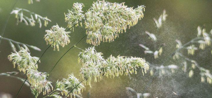 11 tips om hooikoorts draaglijker te maken