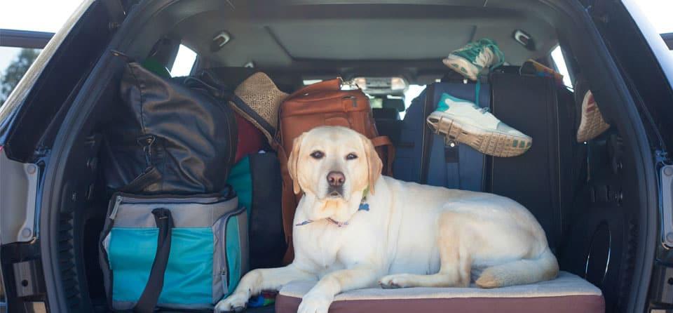 Autovakantie-tips: voorbereid met de auto op vakantie