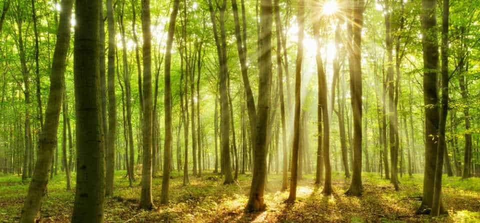 CO2-compensatie: hoe werkt dat eigenlijk?